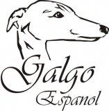 Galgokopf mit Galgo Espanol