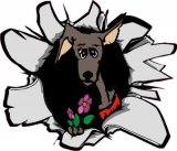 Windhund Zeichnung in 3 Varianten